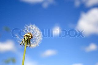 Billede af 'skrøbelighed, allergi, liv'