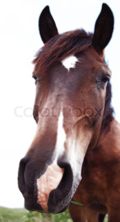 isolated brown horse with white spot on a forehead eating green grass