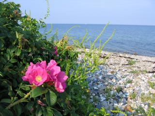 Image of 'beach, samsoe, summer'