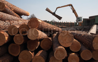 The auto-loader loads logs at factory on tree processing