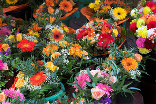 closeup picture of flowers and plants in pots on a market