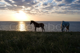 two horses grazing at the sunset over the Black sea
