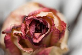 Billede af 'reproducere, naturlig, tørrede'