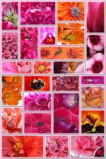 Collage from red, yellow  and pink  flowers