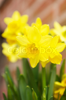 Image of 'easter, easter flowers, green leafs'