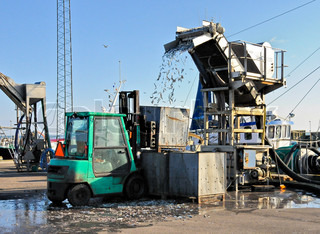 Unloading fish from a trawler to buckets containers truck
