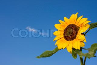 Bild von 'farbig, Bepflanzung, Paar'