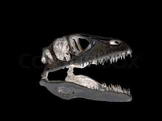 Dinosaur head isolated on black background