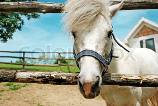 portrait of white cute horse long hair outdoor