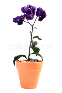 Plant with violet colours in a ceramic pot on a white background.