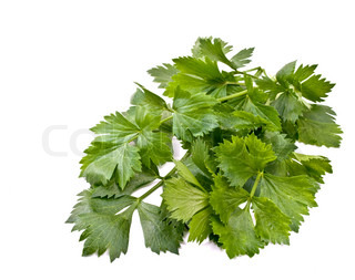 leaves of  celery on a white background