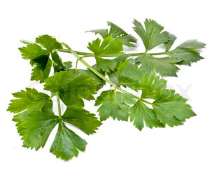 leaves of parsley and celery on a white background