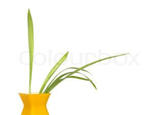 Nice modern yellow vase with green plant isolated on white background with clipping path