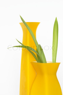 Two nice modern yellow vases with green plant on white background