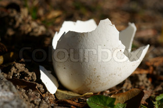 Hatched egg on the ground
