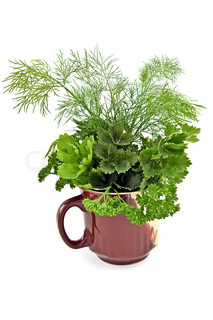 Parsley, celery and fennel in a ceramic mug isolated on a white background