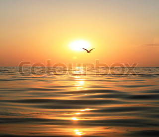 Beautiful sunset, shining in the sun sea and flying seagull
