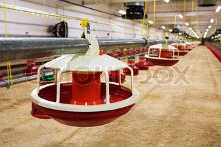 The modern and new automated integrated poultry farm