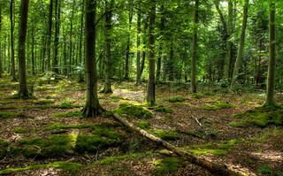 Billede af 'bøgetræ, cool, friskhed'