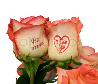 pink roses with inscription ,close-up .Isolated On  white background.