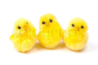 three chickens isolated on white