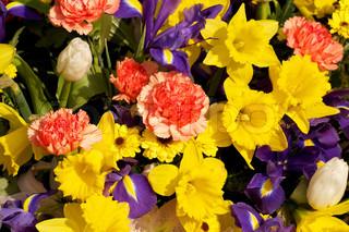 Billede af 'blomsterbuketter, påskelilje, flowerbouquet'