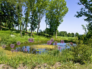 scenic water pond in the beautiful sunny nature