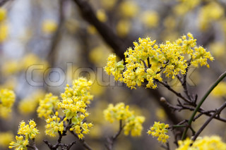 blooming yellow flowers on the branches of a tree