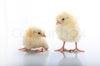 Bild von 'Küken, Huhn, lustig'