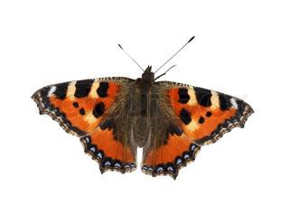 Nice Schmetterling auf weißem Hintergrund mit Clipping-Pfad