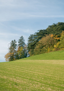 Tilled field on hillside and grove of trees