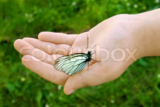White butterfly with black stripes and folded wings to children's hands on a background of green grass