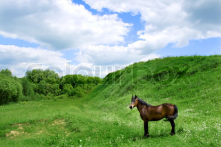 Horse close-up in meadow background