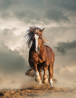 Two wild chestnut horses running together in dust front view wild chesnut draft horse running sciox Choice Image