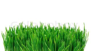 Green Grass isoleret på hvid baggrund
