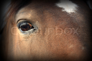 Background with closeup of nice brown horse's head