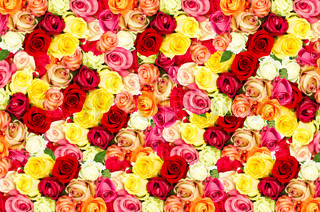 roses. colorful flowers background