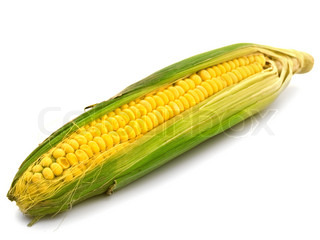 photo of ear corn over the white background