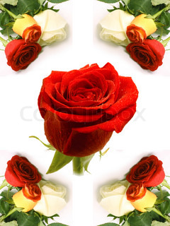 card with the image of roses