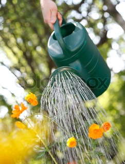 Watering orange flowers with a green plastic watering can