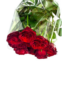 Beautiful red roses on a white background with space for copy.