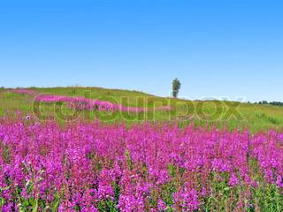 lilla blomster på marken