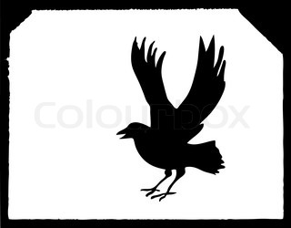 vector drawing ravens on white paper