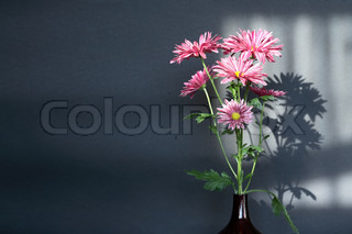 Glass vase with nice pink flowers on dark background