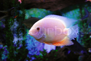 This is a beautiful fish in the sea