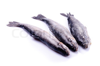 Dead trout isolated on white, prepared for cooking