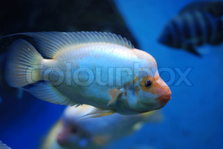 Beautiful tropical fish in the deep sea
