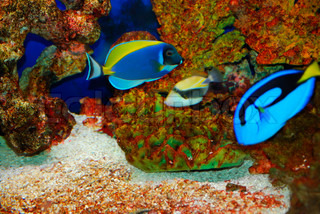 Colorful tropical fishes in the deep sea