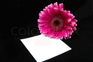pink kiss on a note and a pink flower isolated on black