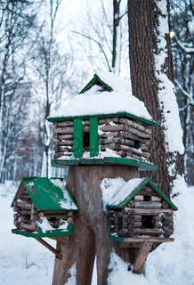 birdhouses with green roof on the winter forest background